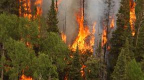 Tierra quemada: Lo que dicen los datos sobre incendios