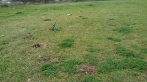 Arrancados los árboles plantados en homenaje a Amparo
