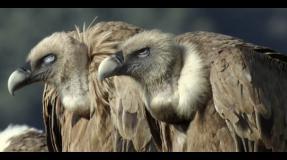 Sobre la fauna ibérica: el estado de derecho español y el buitre leonado