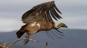 En solidaridad con la lucha Saharahui, El Pájaro Observador comienza su nueva temporada