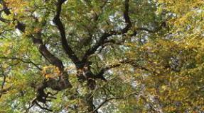 La situación del Bosque de Hambach