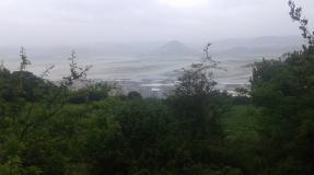 Los jabalíes en la costa oriental cántabra
